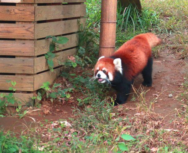 もふもふが多い,千葉市動物公園,市民の日,入園料無料!行ってきた! ♪(^ω^)もふ