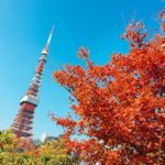 東京タワーと紅葉が一緒に見れる【プリンス芝公園】紅葉が見頃、2018.11.28