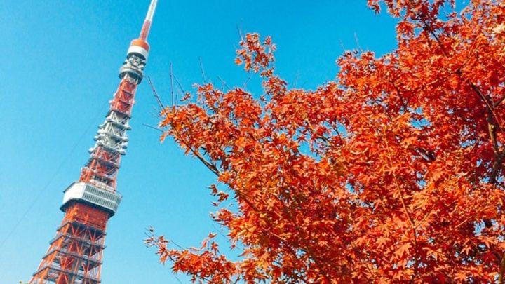 芝公園,紅葉,東京タワー,紅葉が見頃、2018.11.28