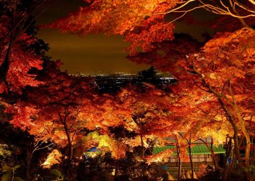筑波山,混雑する時期は筑波山神社からケーブルカーで登る。紅葉は11月上旬