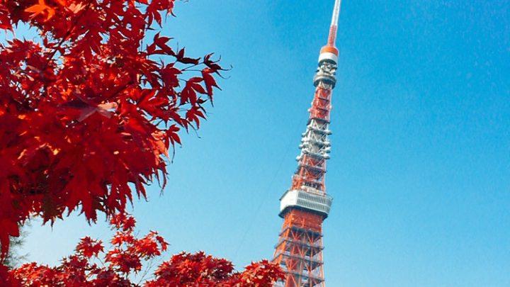 東京タワーと紅葉と、芝公園,2018,動画
