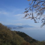 つづら尾崎、3000本の桜、琵琶湖、滋賀県、ドライブ