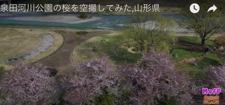 泉田河川公園の桜,空撮,山形県 2019.5