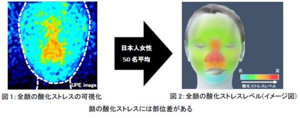 酸化ストレスレベルは加齢に伴い増加、酸化ストレスとシワには密接な関係がある